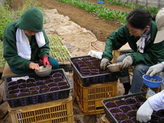 平成22年10月20日菜園インストラクター養成講座前期実習5回