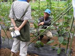 平成23年6月15日菜園インストラクター養成講座実習10回