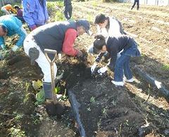 「サトイモ・大根掘り」と「いも煮会」を開催しました。