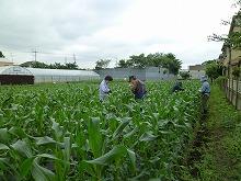 平成24年6月6日 菜園インストラクター養成講座2012 初級前期実習9回