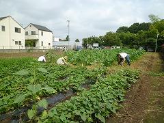 平成23年8月3日菜園インストラクター養成講座実習15回