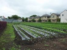平成24年6月13日 菜園インストラクター養成講座2012 初級前期実習10回