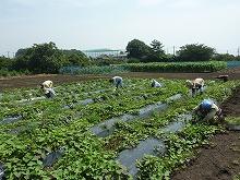 平成24年7月25日 菜園インストラクター養成講座2012 初級前期実習15回