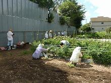 平成24年8月22日 菜園インストラクター養成講座2012 初級前期実習17回
