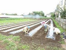 平成24年10月3日菜園インストラクター養成講座2012 初級後期実習第3回