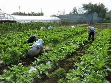 平成24年10月17日菜園インストラクター養成講座2012 初級後期実習第4回