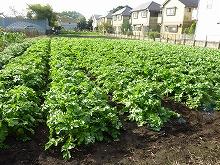 平成24年11月7日菜園インストラクター養成講座2012 初級後期実習第5回