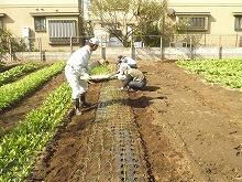 平成23年11月2日菜園インストラクター養成講座 後期実習5回