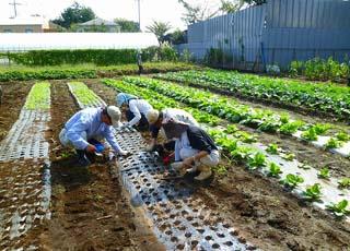 平成22年10月6日菜園インストラクター養成講座前期実習4回
