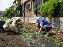 平成24年5月16日 菜園インストラクター養成講座2012 初級前期実習7回
