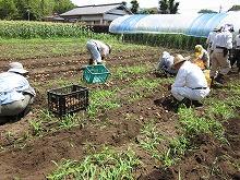 平成24年7月18日 菜園インストラクター養成講座2012 初級前期実習14回
