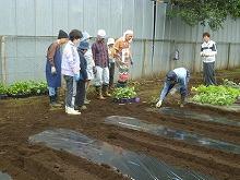 平成24年5月9日 菜園インストラクター養成講座2012 初級前期実習6回