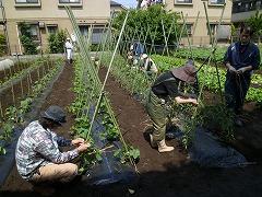平成23年5月25日菜園インストラクター養成講座実習8回