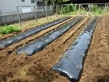 平成24年5月30日 菜園インストラクター養成講座2012 初級前期実習8回