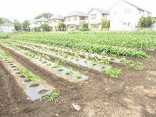 平成24年6月20日 菜園インストラクター養成講座2012 初級前期実習11回