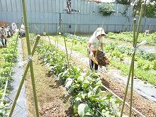 平成24年6月27日 菜園インストラクター養成講座2012 初級前期実習12回