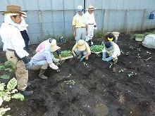 平成24年9月5日菜園インストラクター養成講座2012 初級後期実習第1回