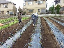 平成24年12月19日菜園インストラクター養成講座2012 初級後期実習第8回