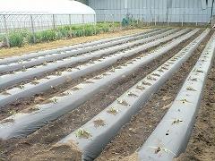 平成23年6月9日菜園インストラクター養成講座実習