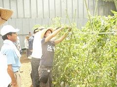 平成23年7月13日菜園インストラクター養成講座実習13回