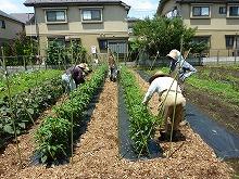 2019年度みたか野菜収穫体験参加者募集