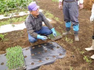 枝豆の苗の植付けを説明する森屋さん