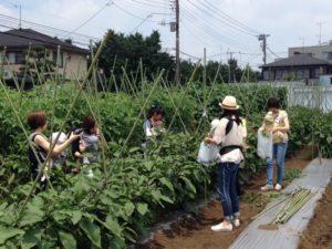 【みたか野菜収穫体験】2016年7月14日(木)