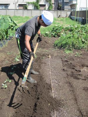 畝を耕します
