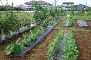 【募集を締め切りました】2021年度みたか野菜づくり体験 参加者募集